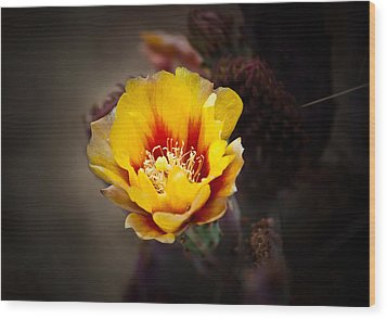 Cactus Flower Wood Print by Swift Family