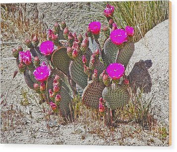 Cactus Flowers Wood Print by Gregory Dyer