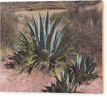 Cactus In Peru Wood Print