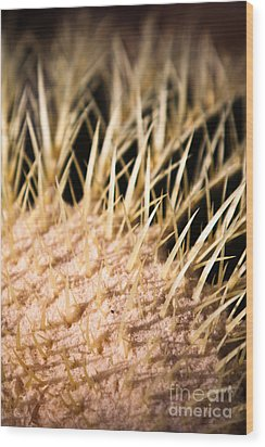 Wood Print featuring the photograph Cactus Skin by John Wadleigh