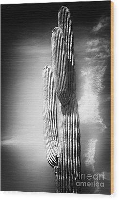 Cactus Spoltlight Wood Print by John Rizzuto