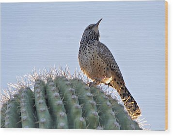 Cactus Wren Wood Print by David Rizzo
