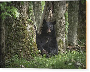 Cades Cove Bear Wood Print by Douglas Stucky