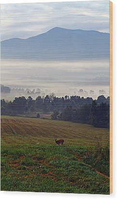 Cades Cove - Misty Morning Wood Print by George Bostian