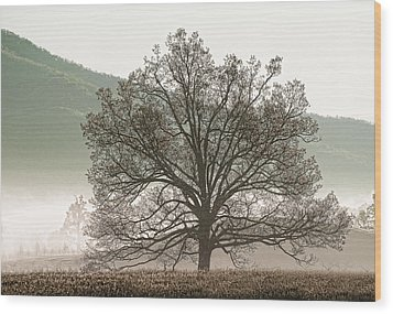 Cades Cove Tree Wood Print by Phyllis Peterson