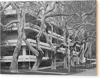 Cal Poly Pomona Landscape Wood Print by University Icons