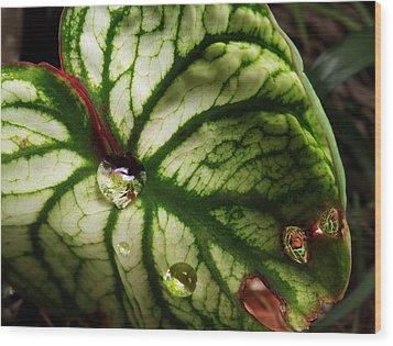 Caladium Leaf After Rain Wood Print by Deborah Smith