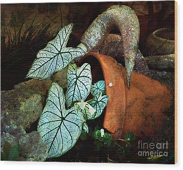 Caladiums In Broken Pot Wood Print by Linda Cox