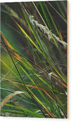 Calamagrostis Lines Wood Print by Rebecca Sherman