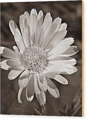 Calendula Wood Print by Chris Berry