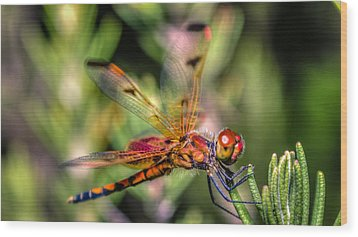 Calico Pennant Wood Print by Rob Sellers