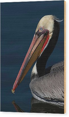 Wood Print featuring the photograph California Brown Pelican Portrait by Ram Vasudev