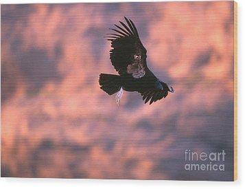 California Condor Wood Print