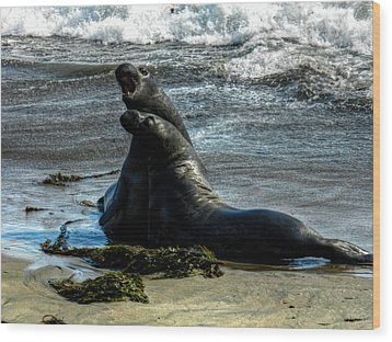 California - Elephant Seals Of Big Sur 006 Wood Print by Lance Vaughn