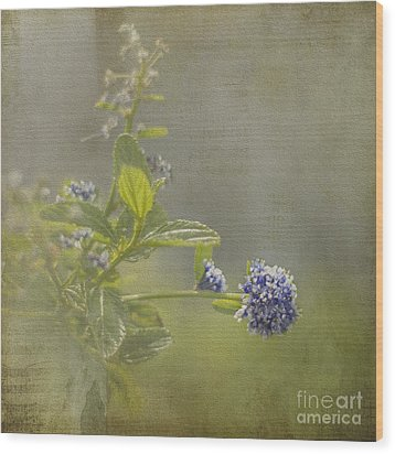 California Lilac Wood Print by Clare Bambers