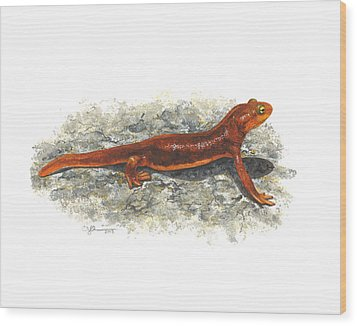 California Newt Wood Print by Cindy Hitchcock