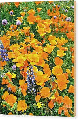 California Poppies And Betham Lupines Southern California Wood Print