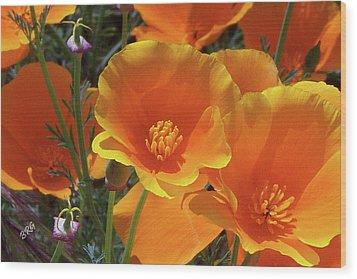 California Poppies Wood Print by Ben and Raisa Gertsberg