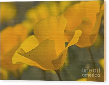 California Poppies Wood Print by Bryan Keil