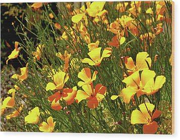 California Poppies Wood Print by Ed  Riche