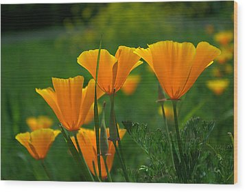 Wood Print featuring the photograph California Poppies by Ken Dietz