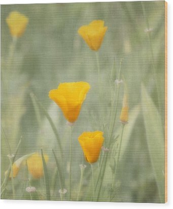California Poppies Wood Print by Kim Hojnacki