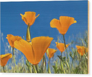 California Poppy 2 Wood Print by Rima Biswas