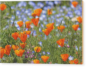 California Poppy Field Wood Print