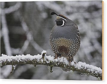 California Quail Wood Print by Inge Riis McDonald