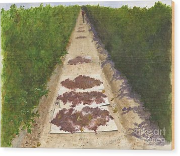 California Raisin Harvest Wood Print by Sheryl Heatherly Hawkins