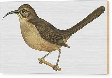 California Thrasher Wood Print by Anonymous