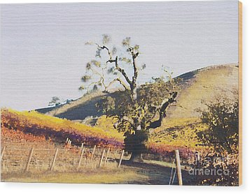 California Vineyard Series Oaks In The Vineyard Wood Print by Artist and Photographer Laura Wrede