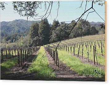 California Vineyards In Late Winter Just Before The Bloom 5d22053 Wood Print by Wingsdomain Art and Photography