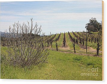California Vineyards In Late Winter Just Before The Bloom 5d22121 Wood Print by Wingsdomain Art and Photography