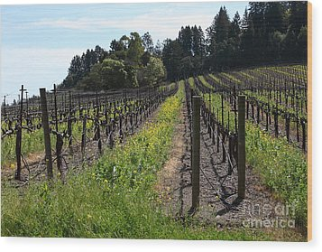 California Vineyards In Late Winter Just Before The Bloom 5d22166 Wood Print by Wingsdomain Art and Photography