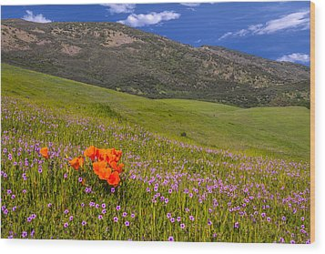 California Wildflowers Wood Print