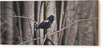 Call Of The Red Winged Blackbird Wood Print by Henry Kowalski