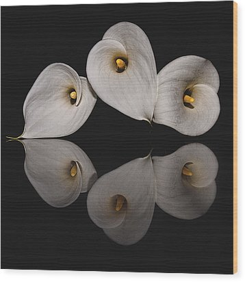 Calla Circle D4423 Wood Print by Wes and Dotty Weber