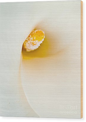 Calla Lilly Wood Print by Bill Gallagher