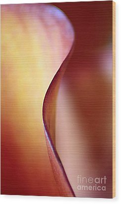 Calla Lily Abstract Wood Print by Darren Fisher