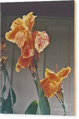 Calla Lily Wood Print by Fred Jinkins