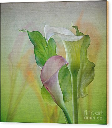 Calla Lily Garden Wood Print by Shirley Mangini