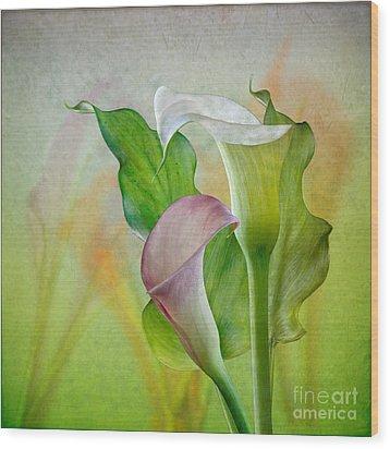 Calla Lily Garden Wood Print