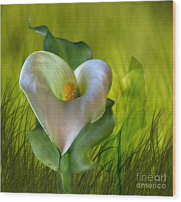Wood Print featuring the digital art Calla Lily Glow by Shirley Mangini