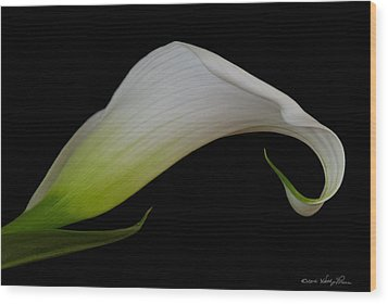 Calla Lily I Wood Print by Kathy Ponce