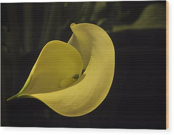 Calla Lily Iv Wood Print by Ron White