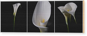 Wood Print featuring the photograph Calla Lily by Lana Enderle