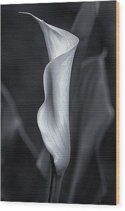 Calla Lily No. 2 - Bw Wood Print