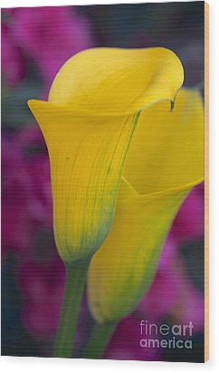 Calla Lily - Yellow Wood Print by Vinnie Oakes