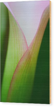 Wood Print featuring the photograph Calla Lily by Zoe Ferrie